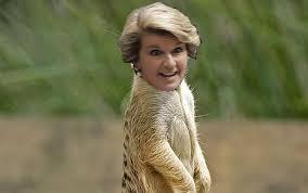 Bishop meerkat