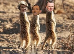 Meerkats +3+